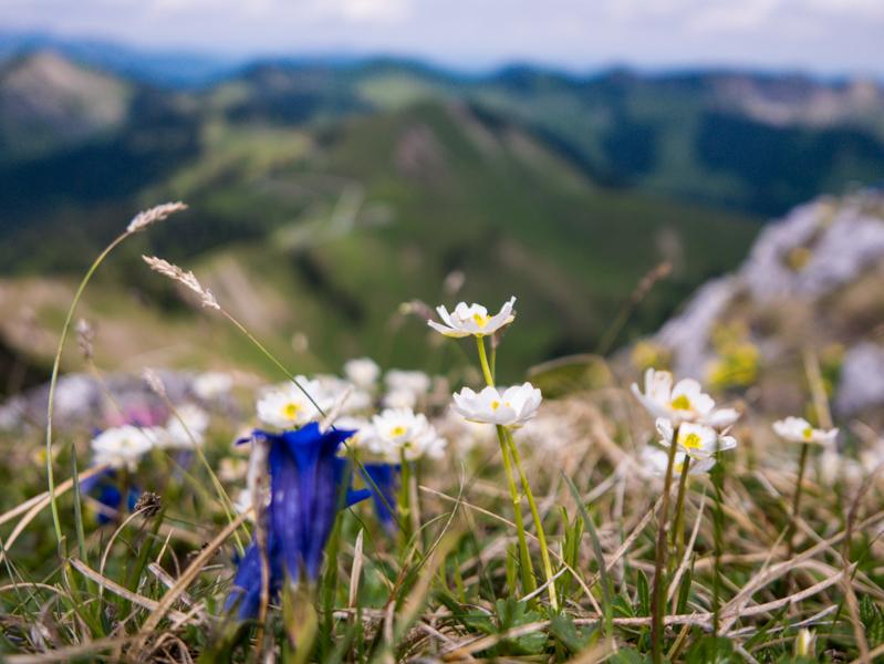 Klettersteig Tegernseer Hütte : Roßstein buchstein und tegernseer hütte outdoorlogbuch