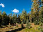 Herbst am Healy Creek