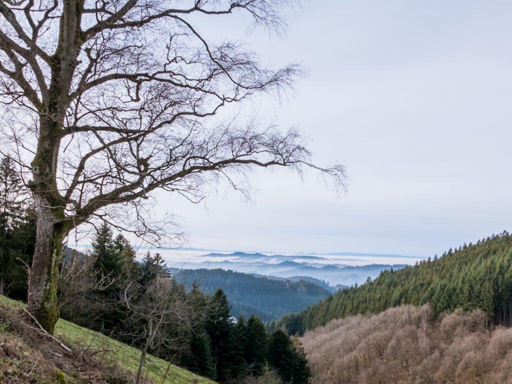 Nebel am Harkhof